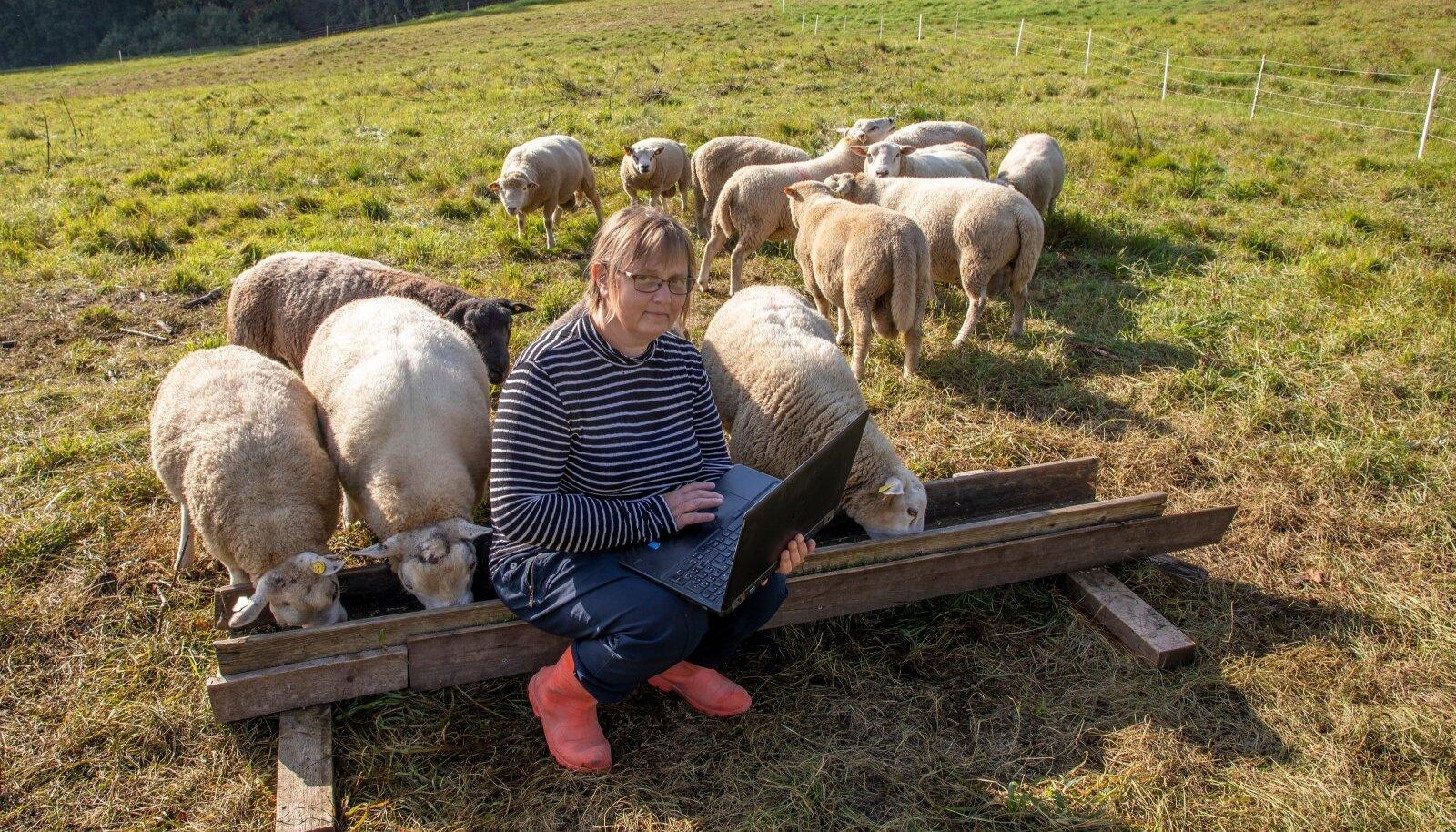 Ell Sellis, lambakasvataja, Väike-Hauka talu, Kanepi vald