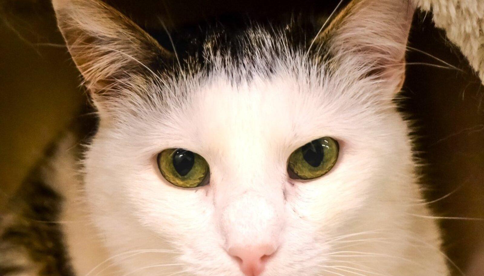 Kass Taavi