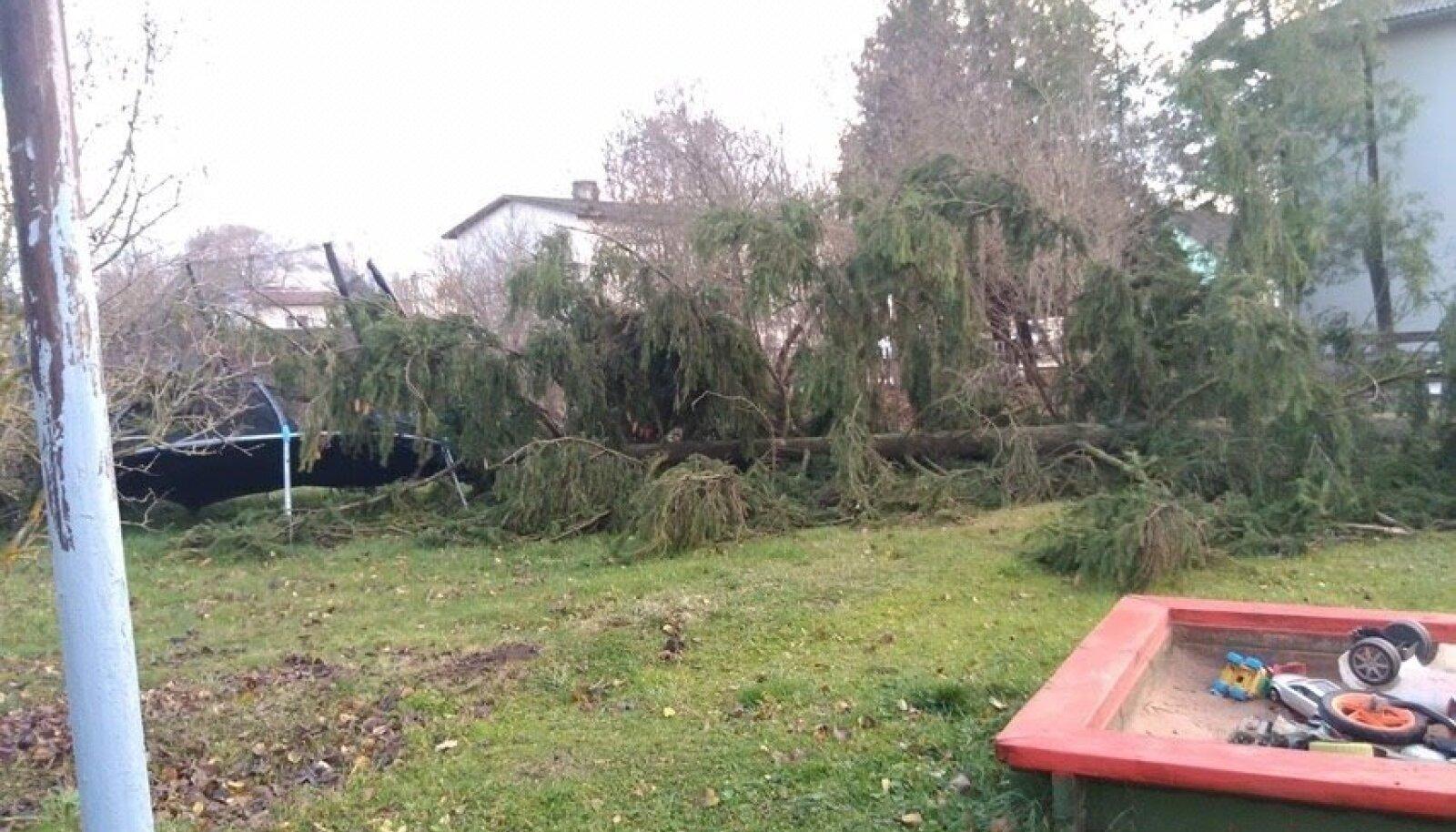 Torm murdis Elvas puu koduhoovi.