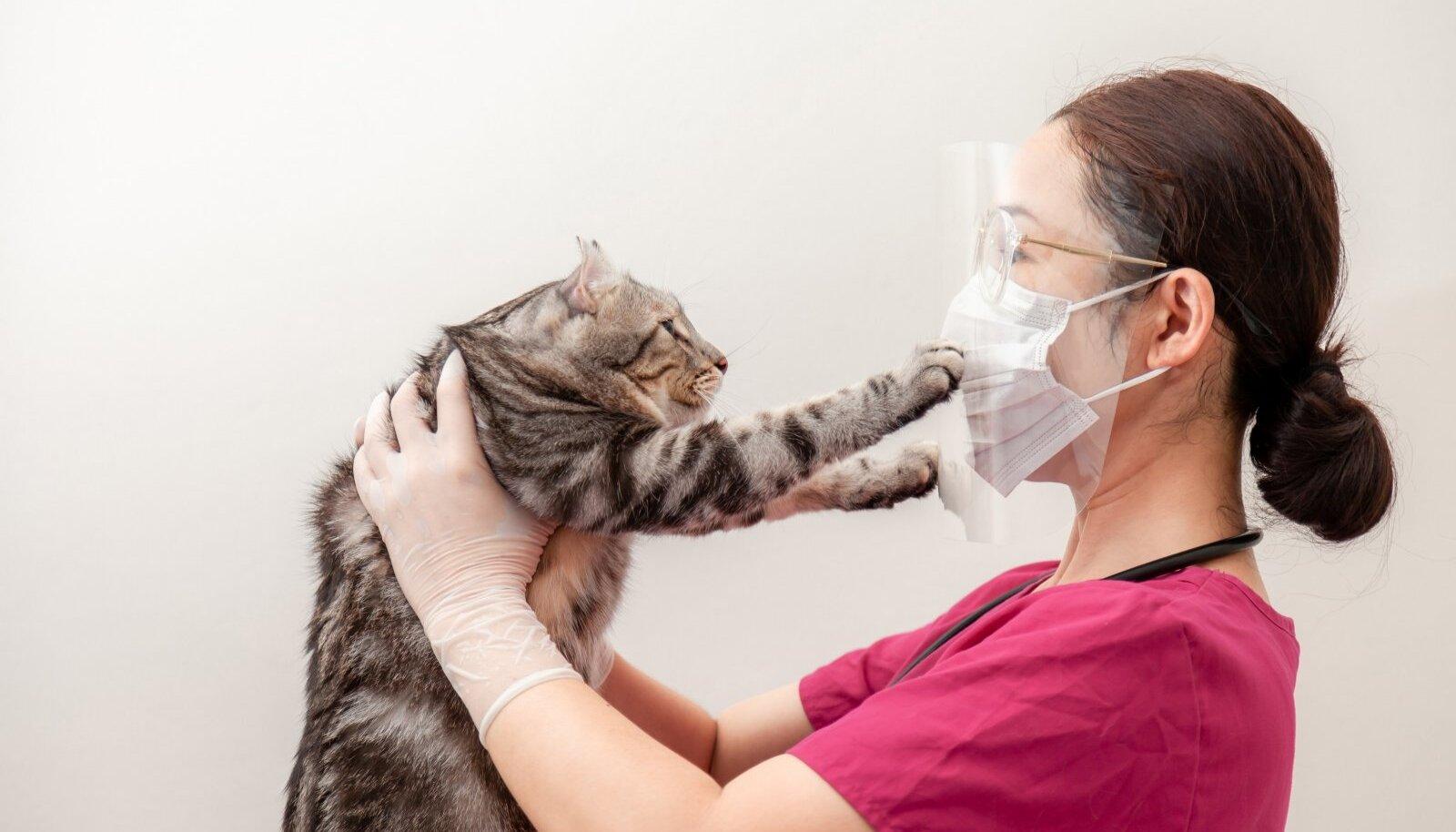 HOIDU MUSIST: Pole teada, kas kassidelt-koertelt Sars-Cov-2 tagasi inimestele levib, aga teadlased soovitavad lemmikuid mitte musitada.