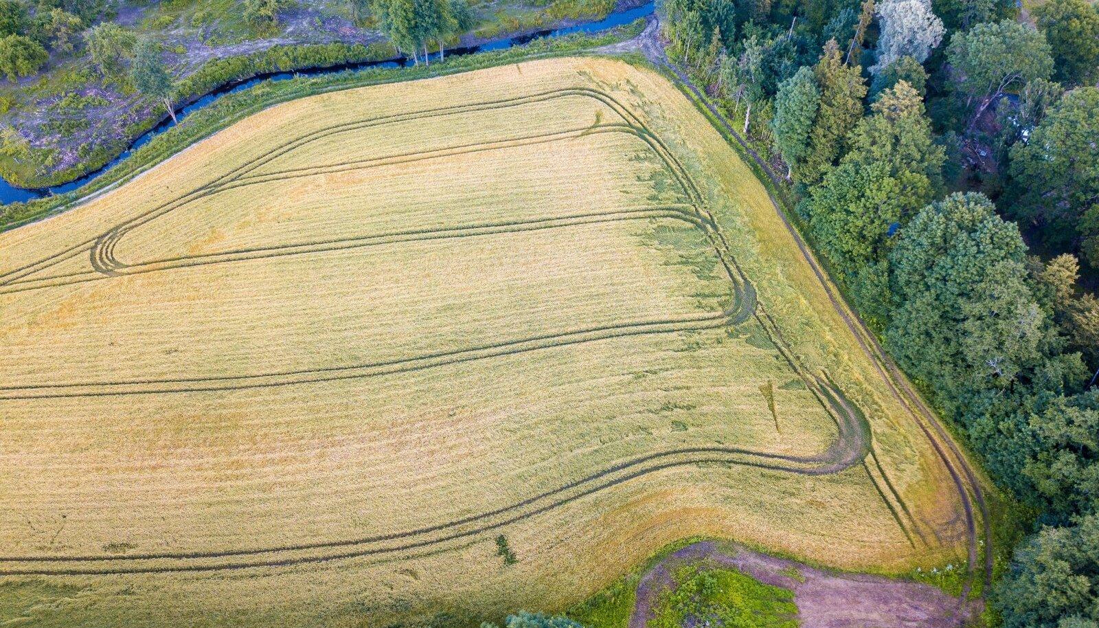Riigikogus arutatav eelnõu lubab piiratud juhtudel rajada väärtuslikule põllumaale puuderea või heki, kiviaia või puudesalu, aga mitte muid maastikuelemente.