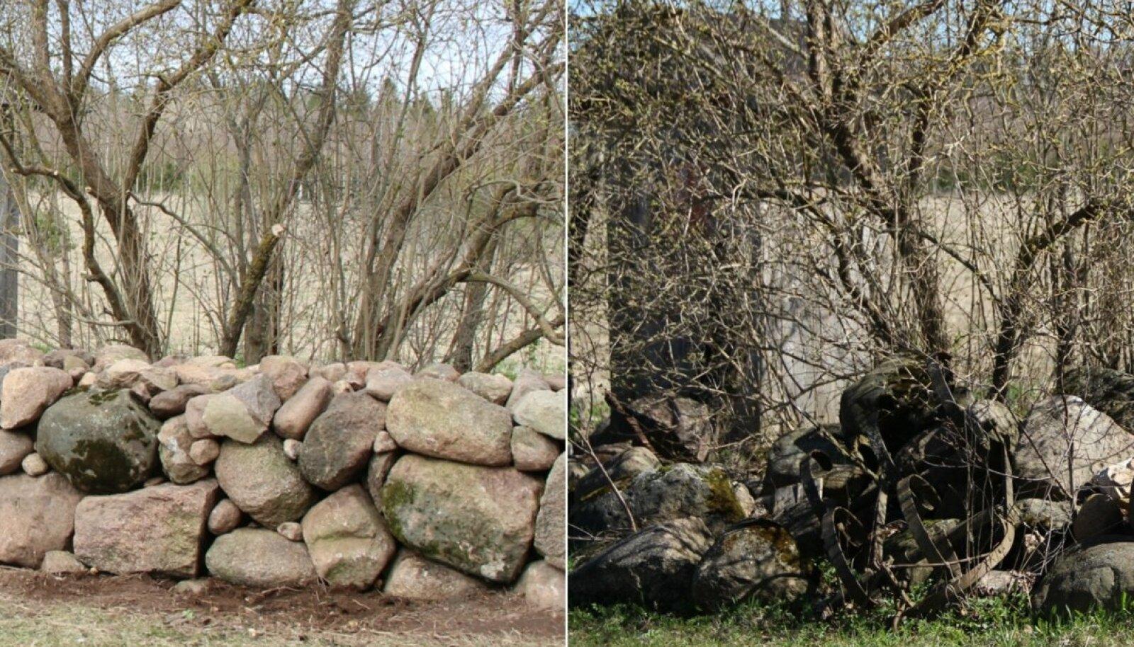 """""""Teeme ära 2017"""": Jaago käsitöötalu talgupäeval korrastati kiviaeda."""