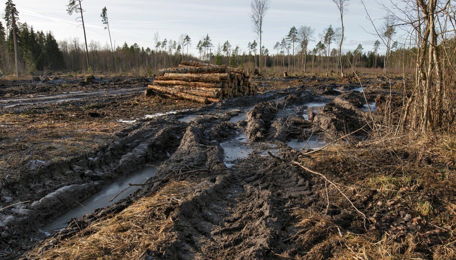 Eesti on küll praegu varasemast metsasem, kuid metsades kohtab palju hoolimatu raiega rikutud kohti.