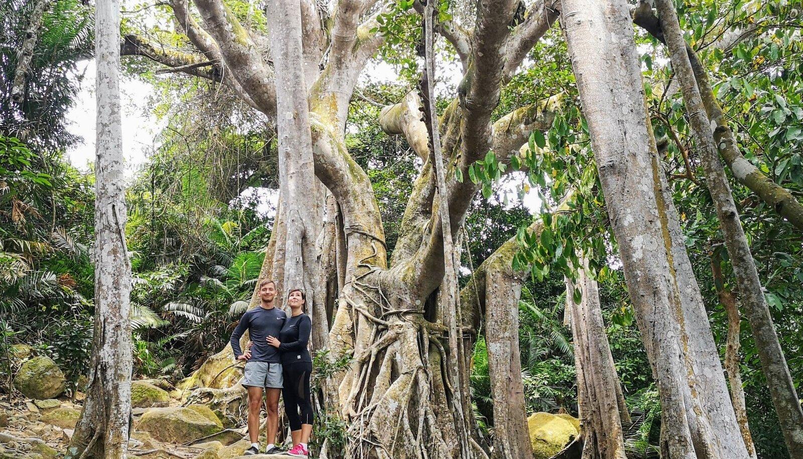 Märt ja Sandra Son Tra poolsaarel 800-aastase Banyan puu taustal