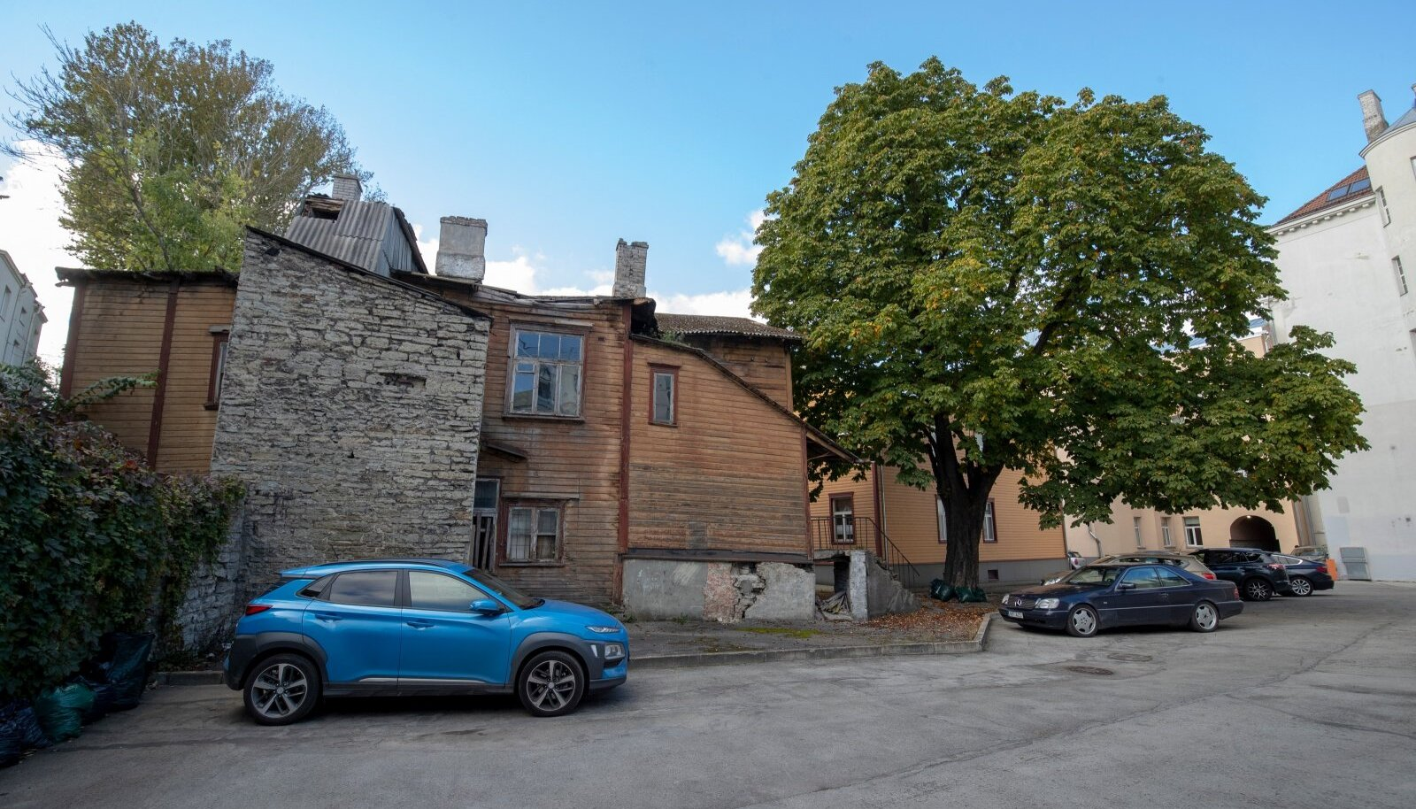 Narva mnt 20/3 juures kasvav hobukastan on imeilus, aga segab kolme maja rahvast.