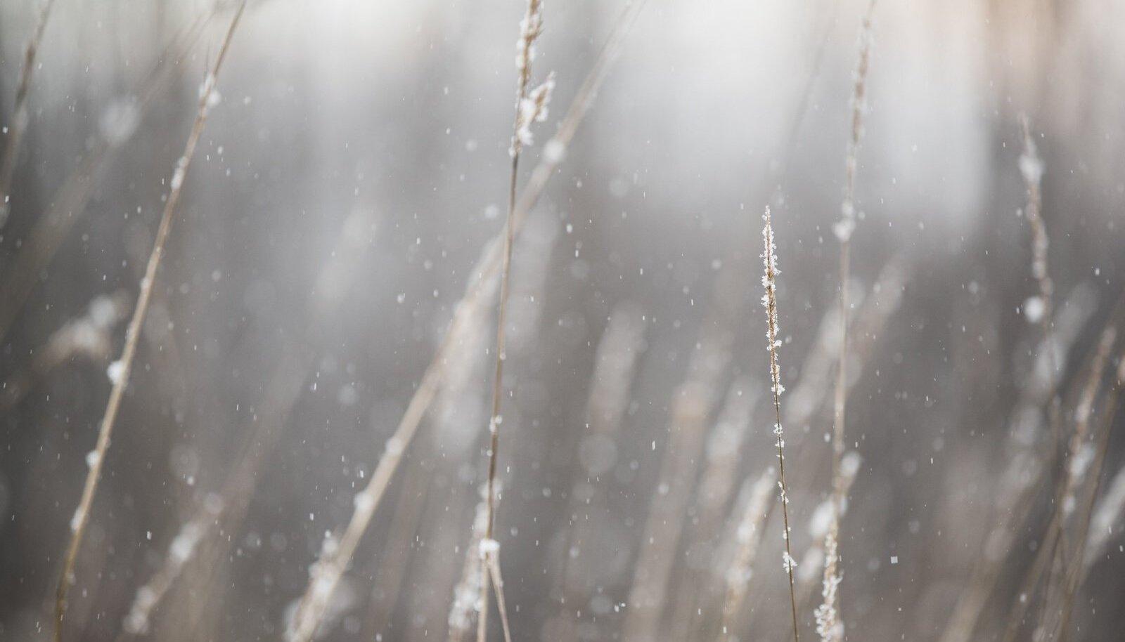 Esimene lumi Tartumaal 2019