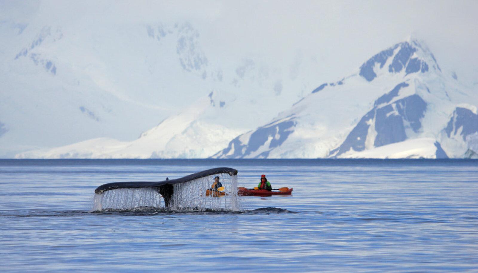 Antarktikasse