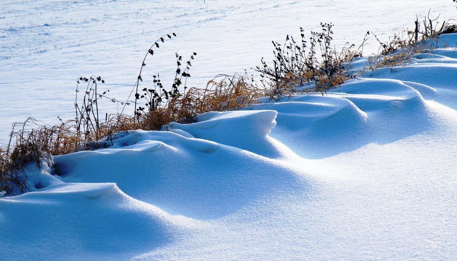 Talvisele maastikule lisavad graafikat kuivanud taimed.