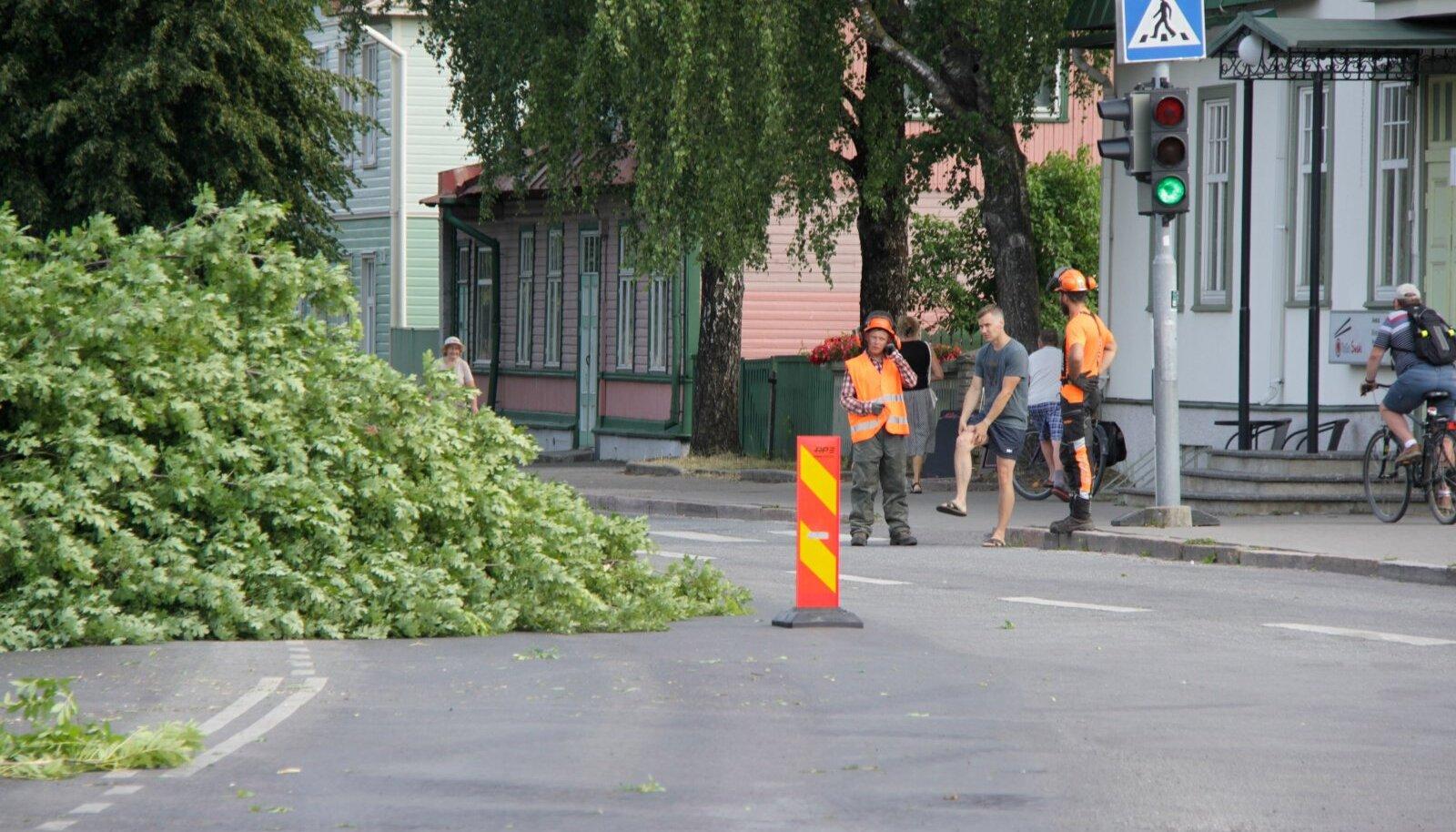 Haapsalus võetakse maha 115 puud