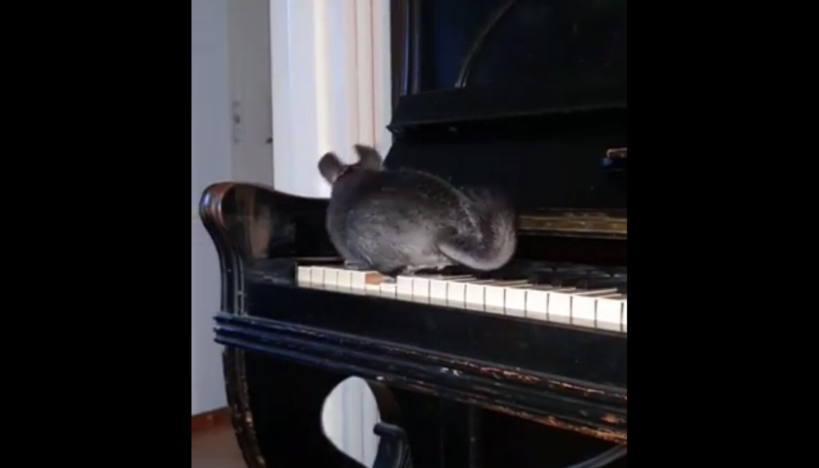 Tšintšilja klaveritund