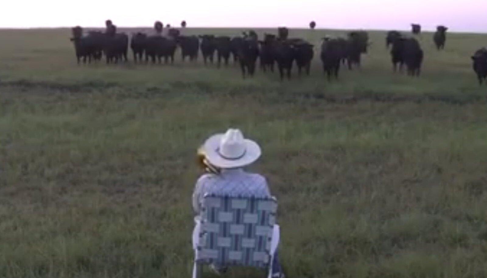 Lehmakari kontserdil