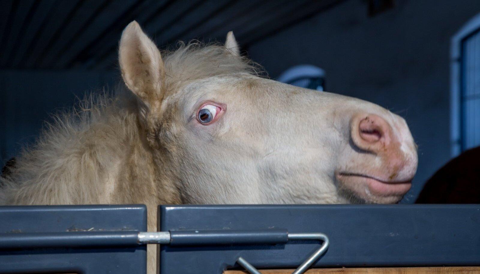 Renoveeritud Tori hobusekasvanduses