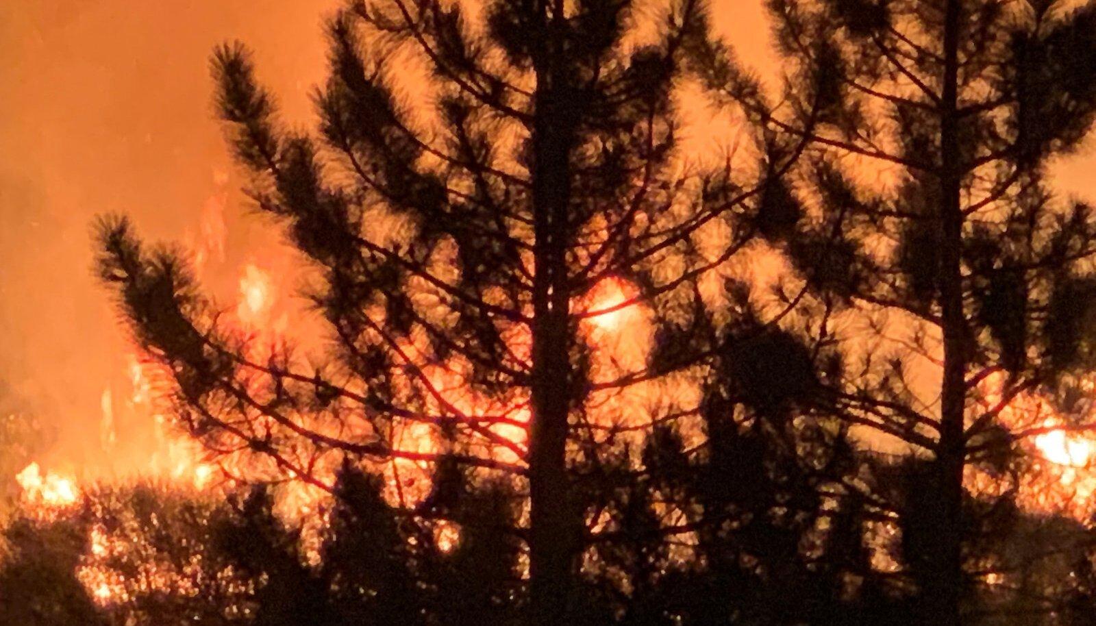 Bobcat Fire burns in Mount Wilson, California