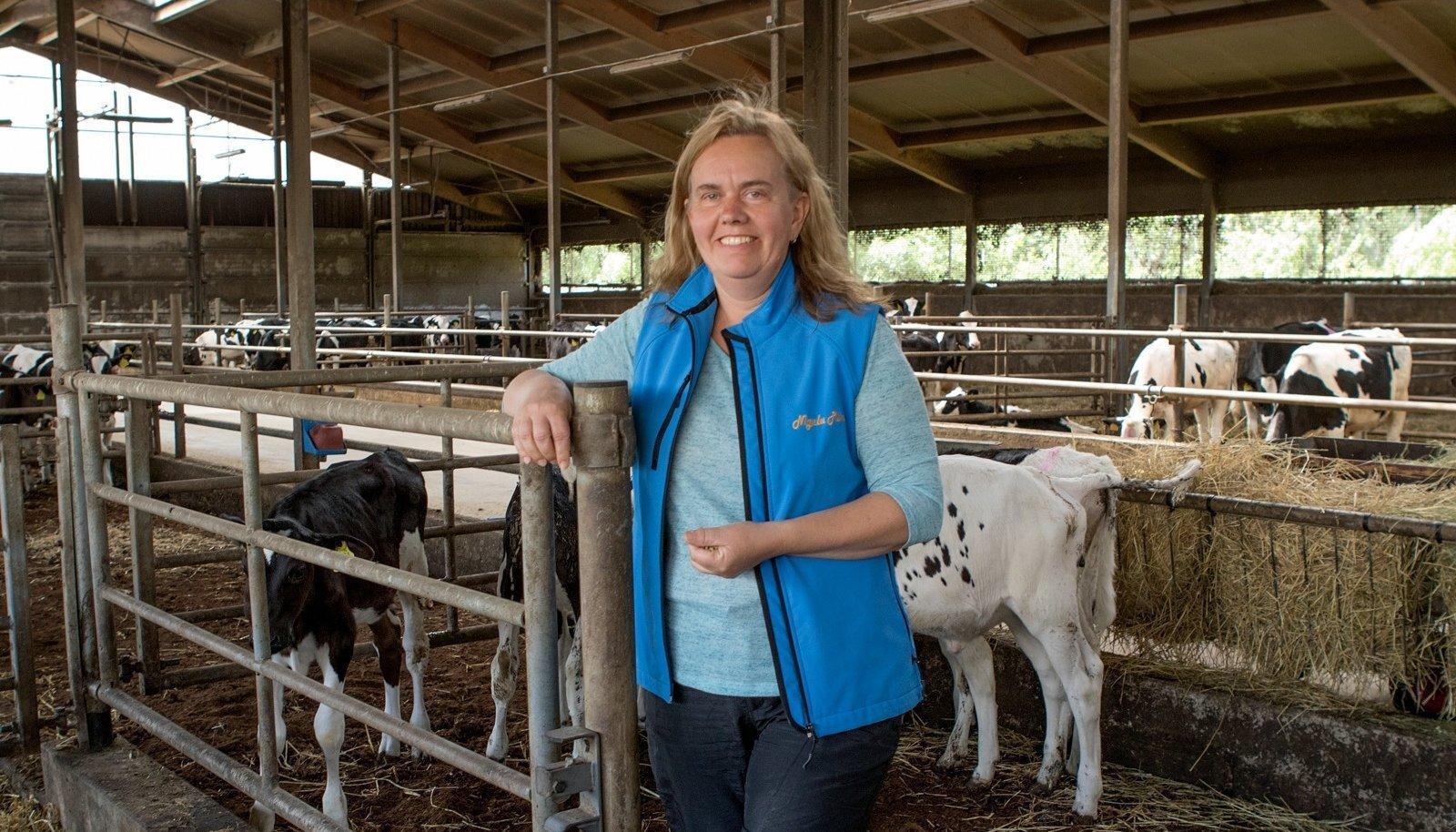 Tiina Roosalu on edukalt aretanud OÜ Nigula Piim karja ning kinnitab, et nende loomi maha ei müüda.