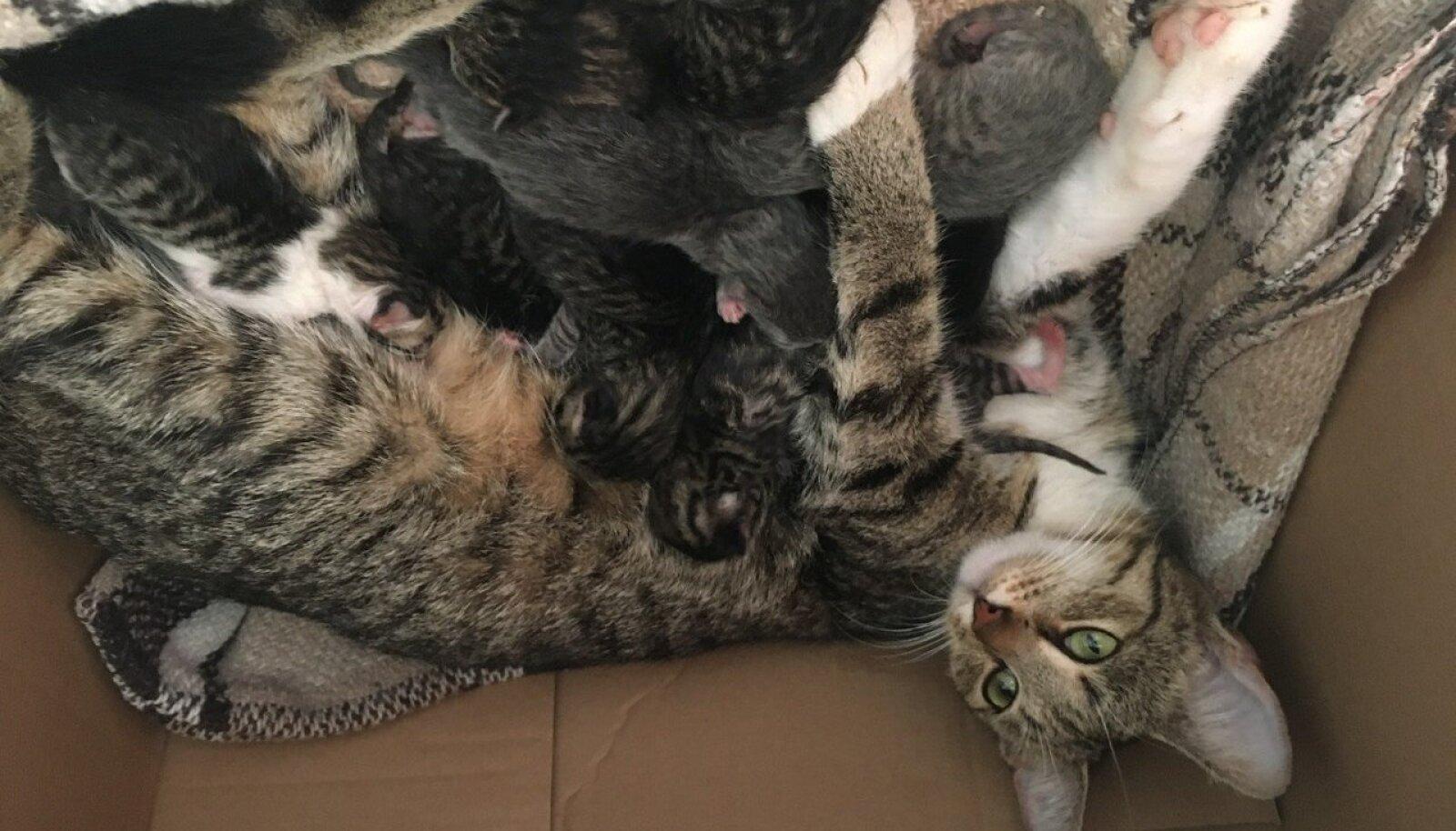 Kass nimega Pähkel ja tema kümme poega