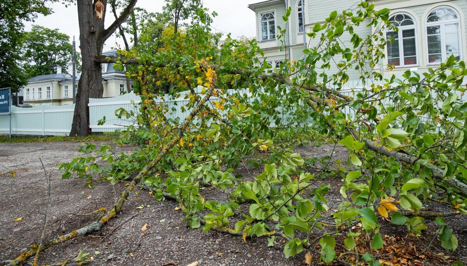 Tallinn, 17.09.2020. Rajuilm murdis Kadriorus puid.
