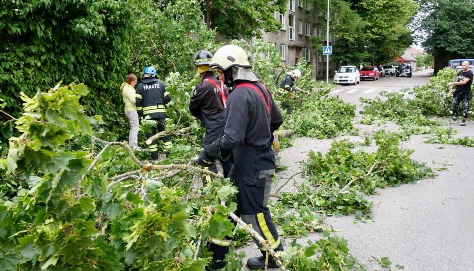 Torm murdis puid, millest osa kukkus elektriliinidele.