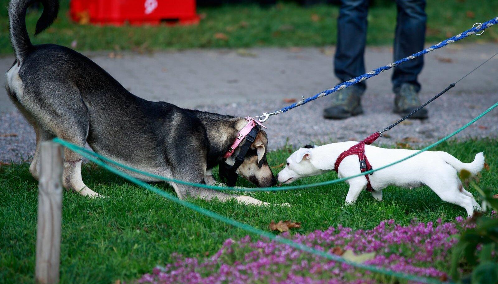 Teise koera lõhn on kutsule infoallikaks