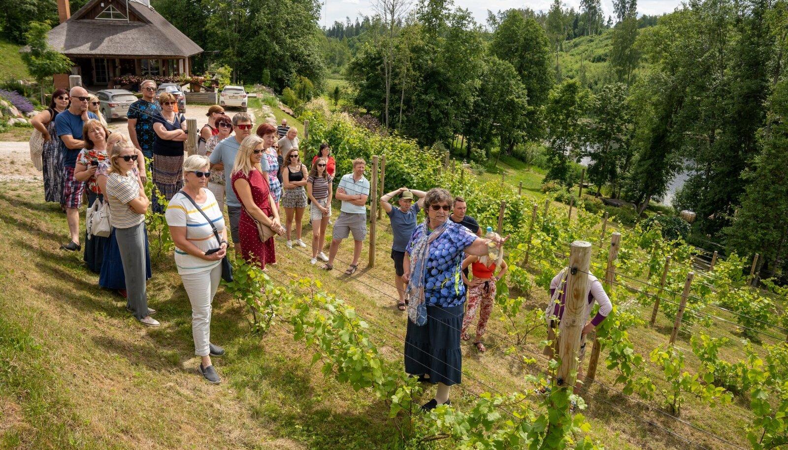 Mullu võlus külastajaid Murimäe Veinikelder. Tänavu oodatakse huvilisi nii 24. kui 25. juulil.