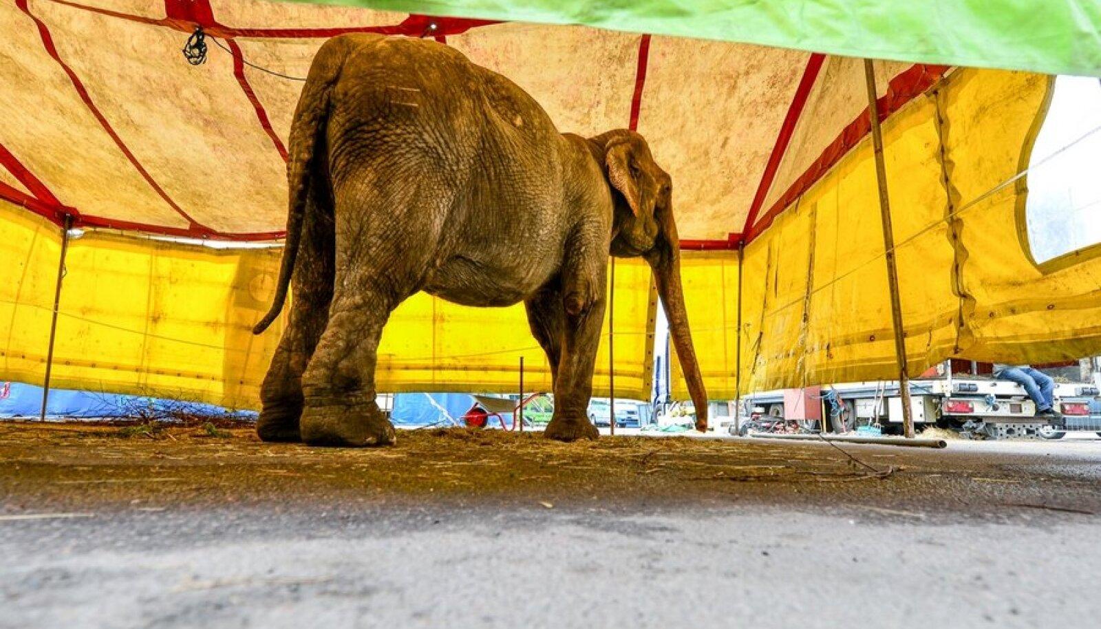 Loomakaitsjate meeleavaldus tsirkuse vastu