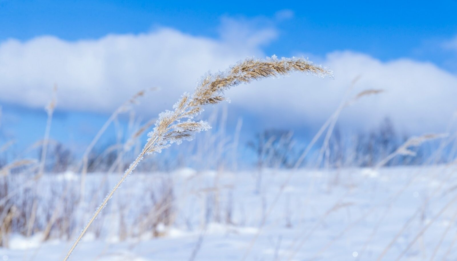 Imeilus talveilm