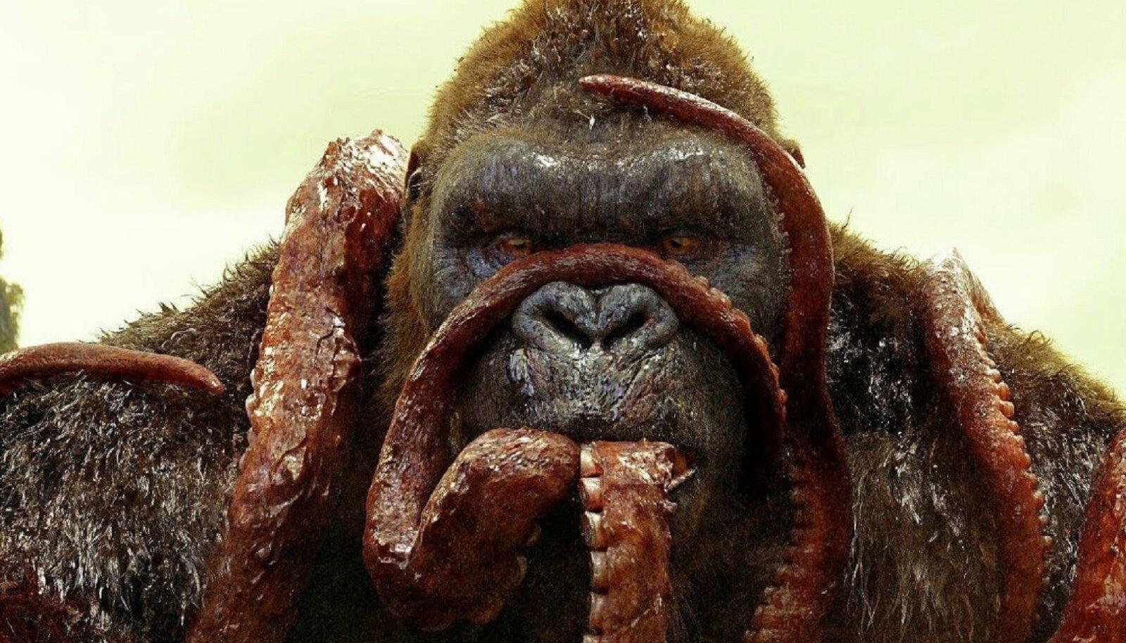 """""""Kong: Pealuu saar"""""""