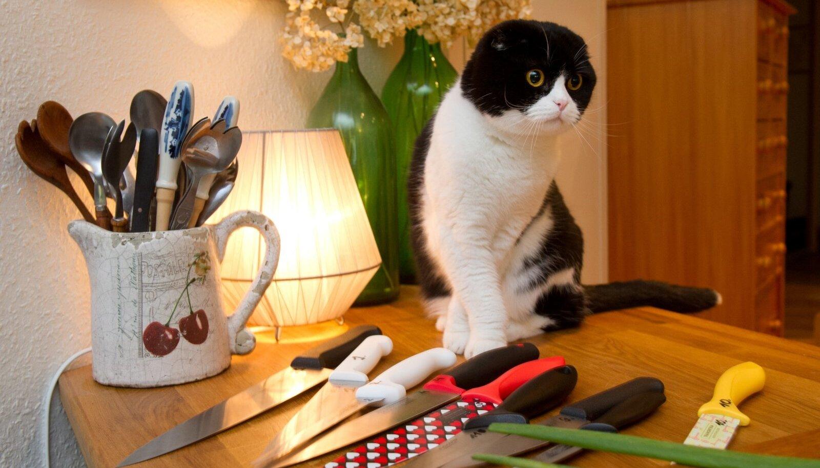 Kass on karnivoor, seega taimetoidust talle ei piisa