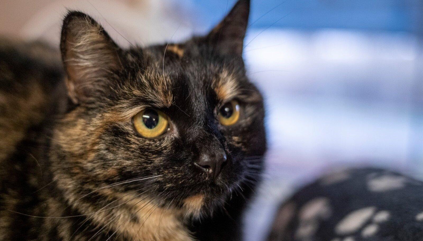 Kass (foto on illustreeriv)