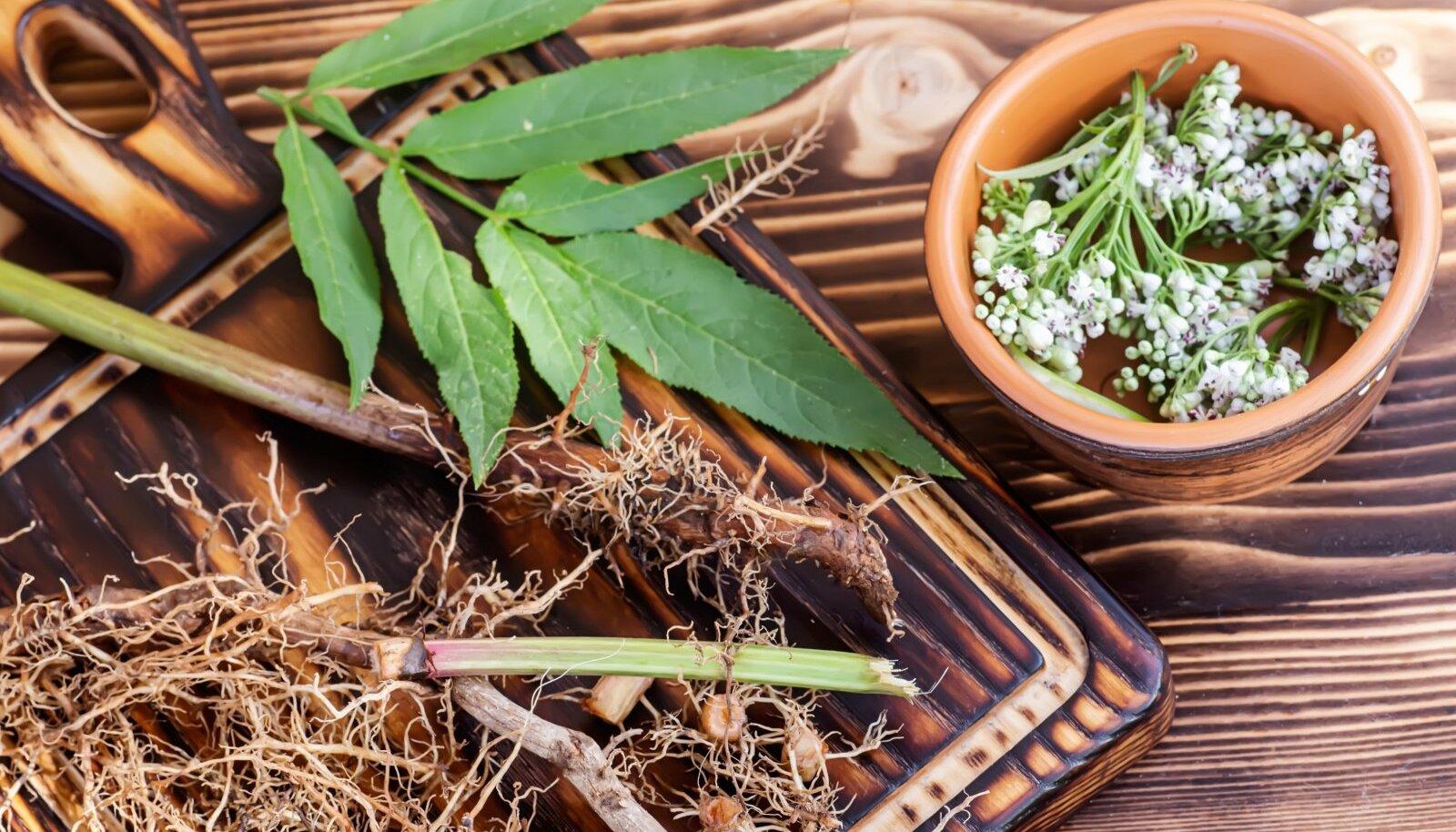 Palderjanijuuri võib pärast taime õitsemist olla raske leida, seetõttu tasub taimed õitsemise ajal ära märkida.