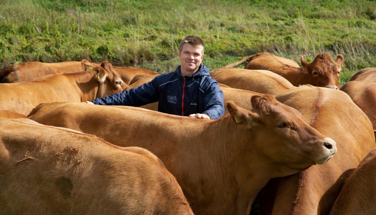 """""""Varem meeldis mulle rohkem teraviljakasvatus, aga viimaste aastatega on lihaveised saanud üha hingelähedasemaks,"""" teatab Andres Vaan oma limusiinide keskel."""