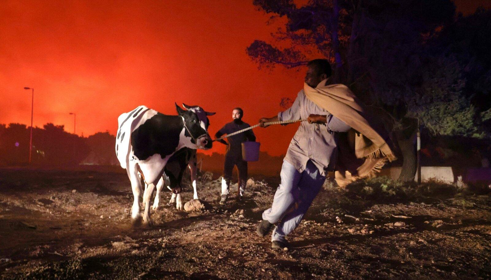 Ateena põhjapoolsest eeslinnast evakueeritakse elanikke ja loomi.