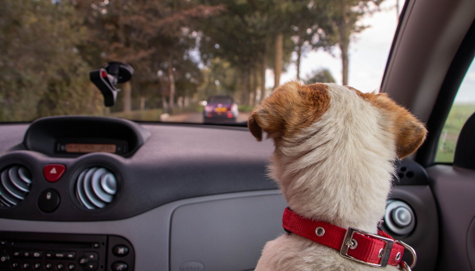 Koer autos