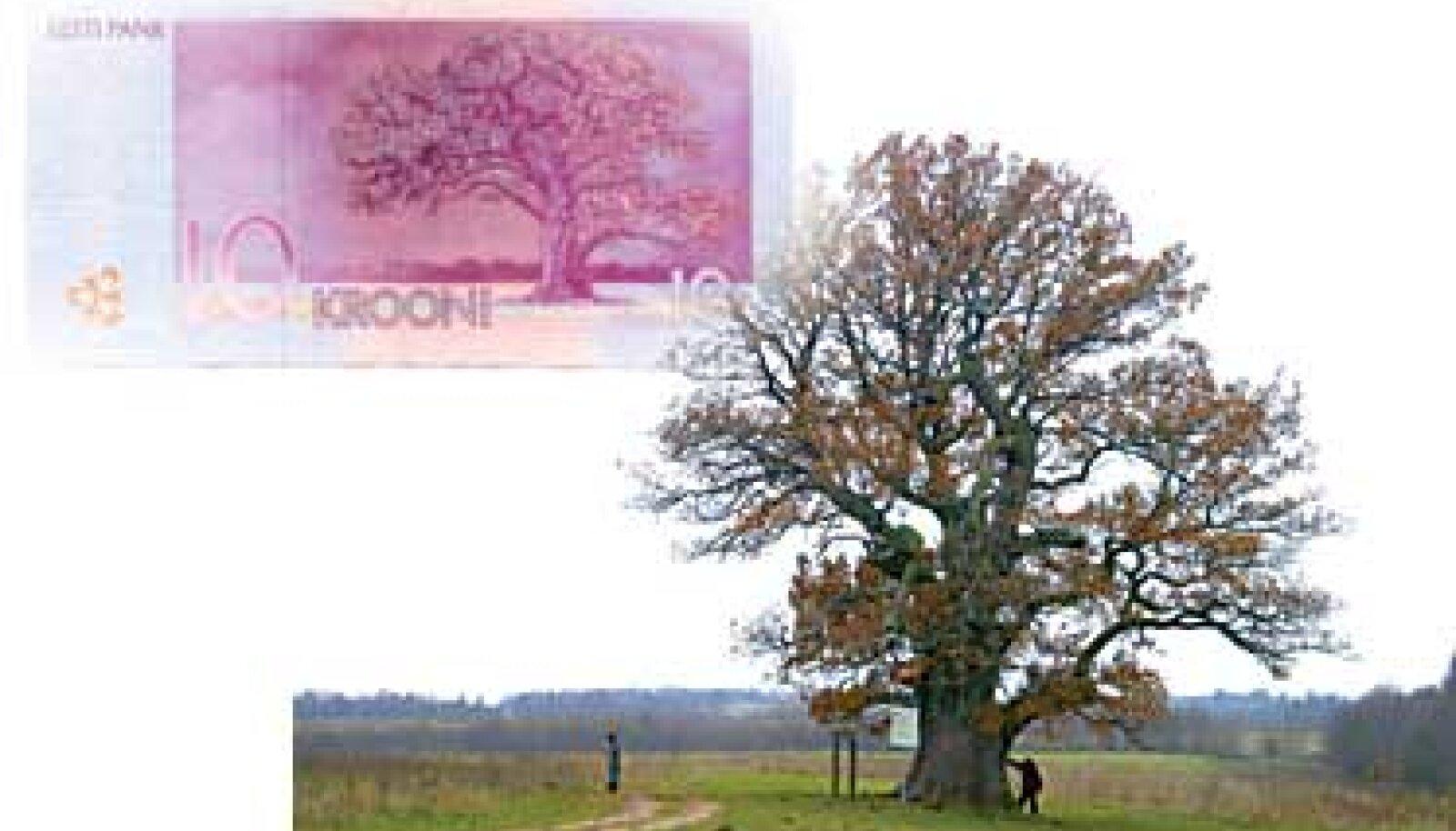 TAMME-LAURI TAMM: Hoolimata betoonsüdamest kasvab puu mühinal inimesest järjest suuremaks.