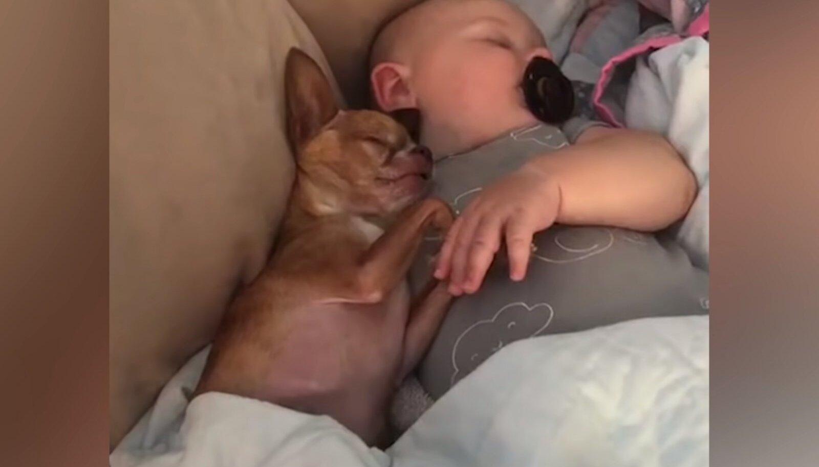 Chihuahua ja beebi