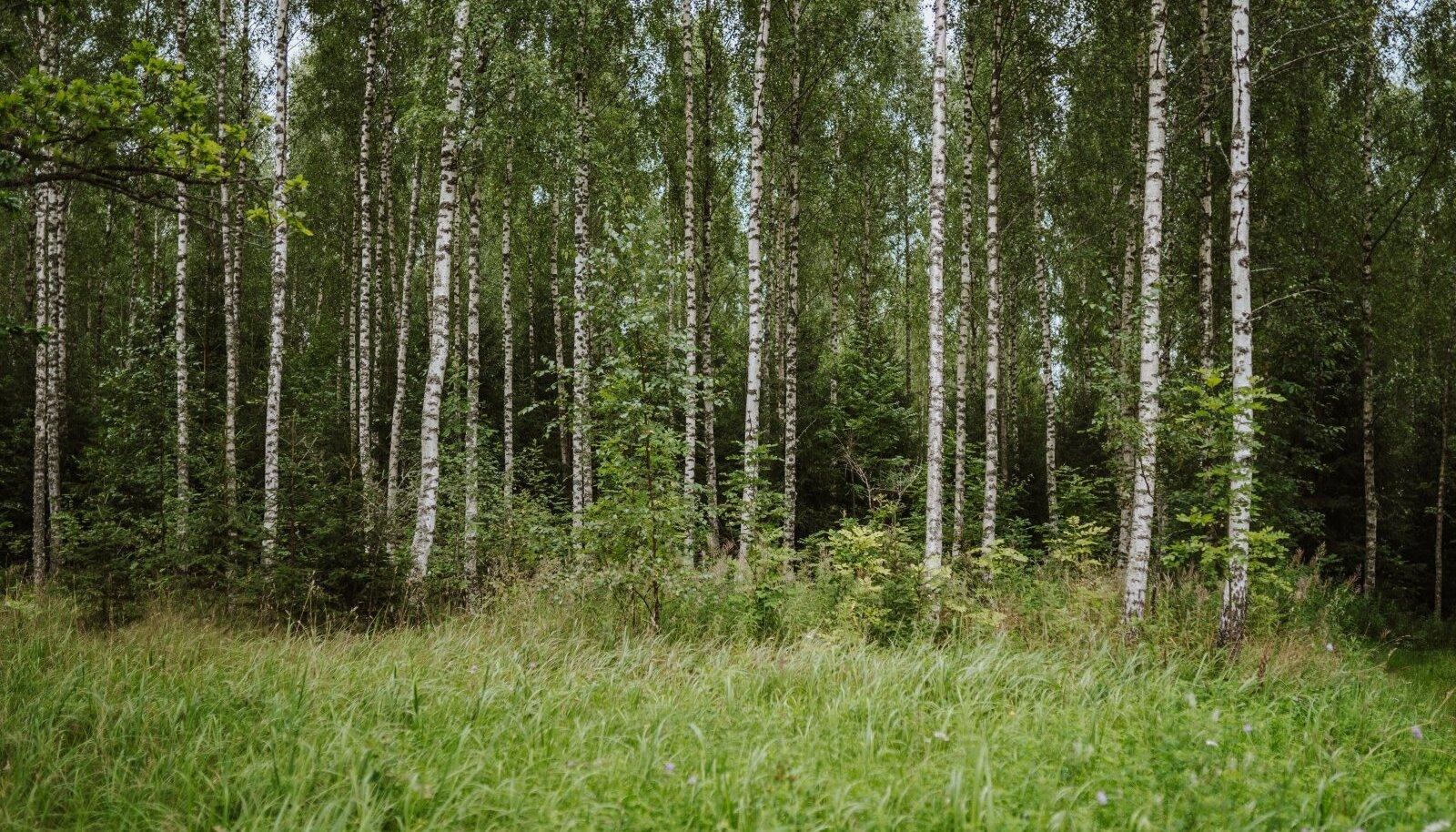 Eesti inimesed tähtsustavad metsa kui planeedi kopse ja mõnusat ajaviitmispaika.