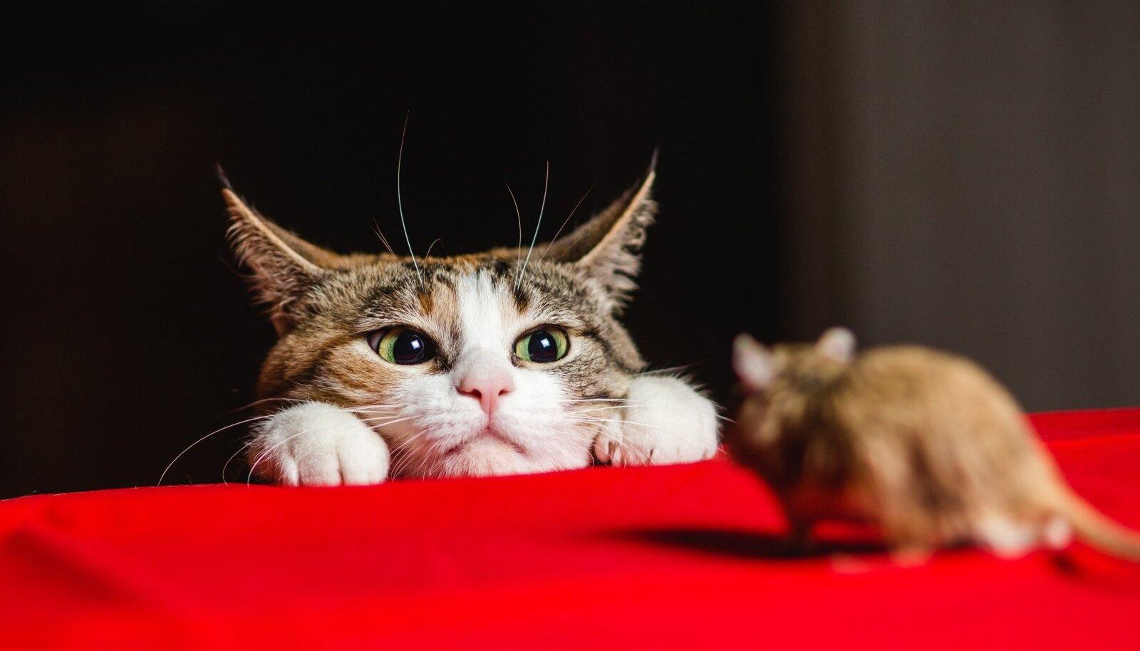 Pikad ja kirglikud arutelud selle üle, kuidas maamajas hiirtest lahti saada, lõppevad alati soovitusega võtta kass.