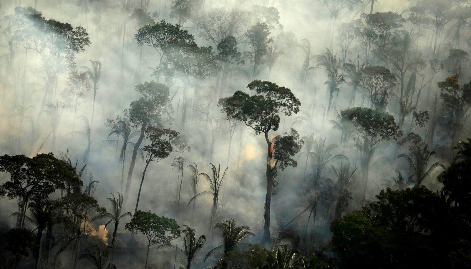 Enamik tekkivatest emissioonidest on Amazonase tulekahjude tagajärg, millest paljud on süüdatud teadlikult, et tekitada vaba maad liha- ja sojatootmise jaoks.