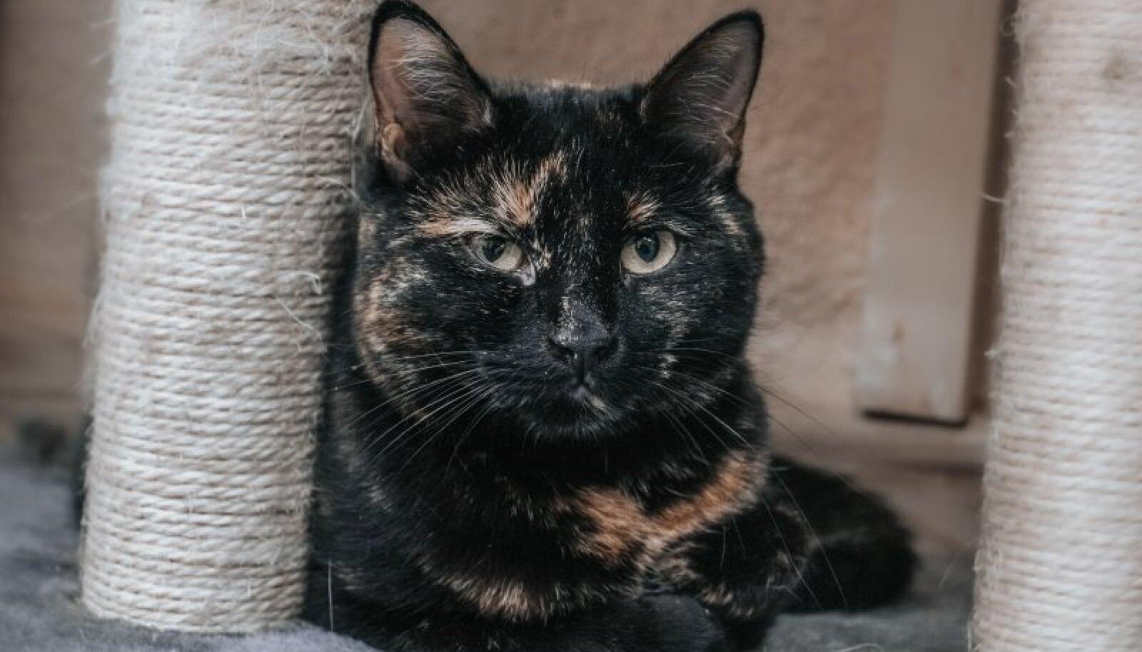 Pesaleidja kaudu kodu otsiv kass Mirri
