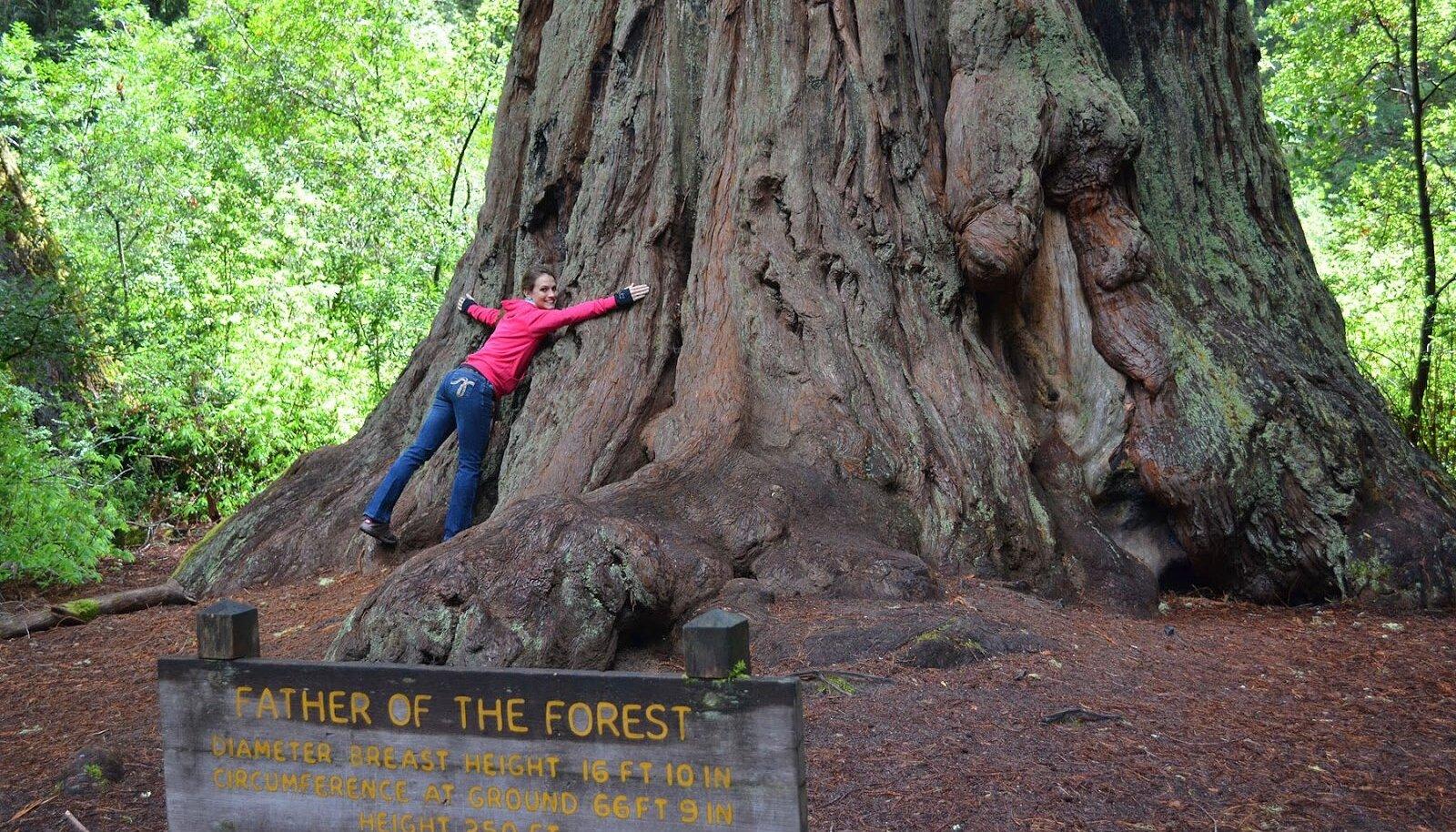 Mõni puu on eriti kaitsmist väärt. https://1.bp.blogspot.com