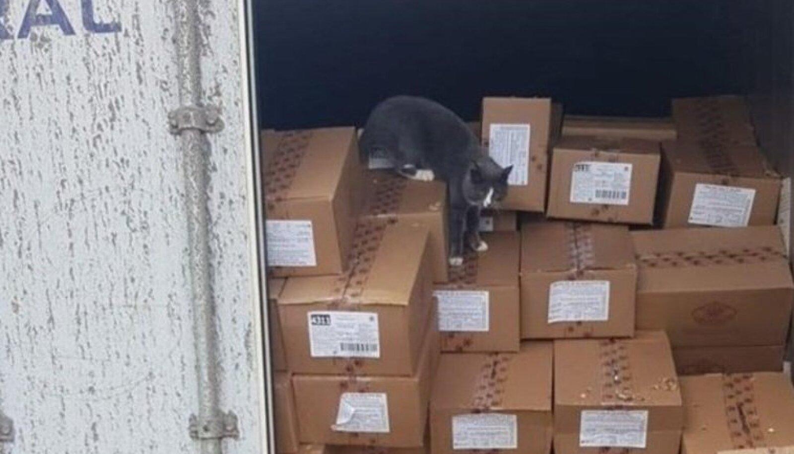 Konteineris merereisi kaasa teinud kass