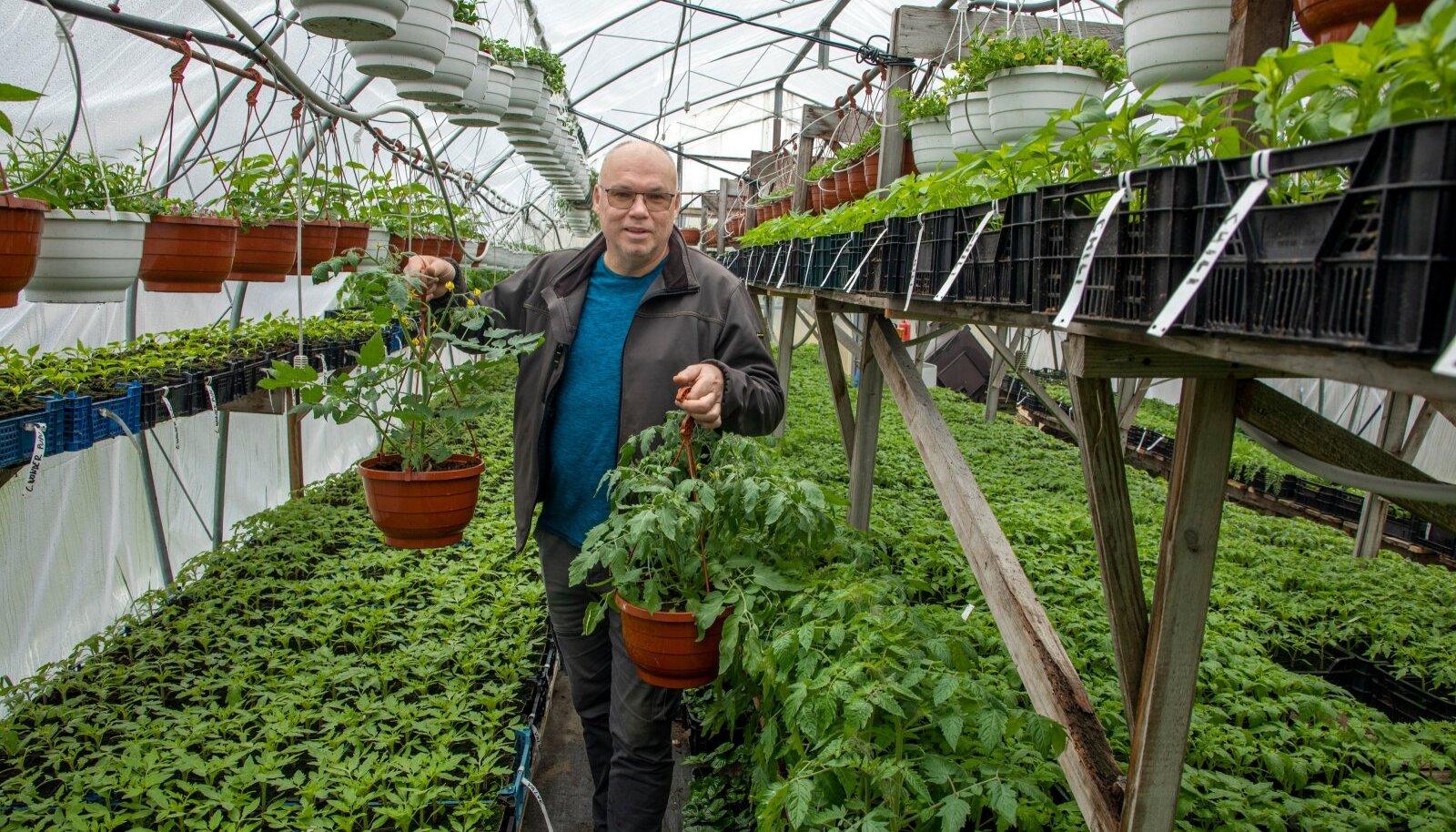 """""""Meie kandis on nii palju suvilaid, et taimemüük läheb kohapeal hoopis paremini kui pealinna turgudel,"""" teatab Ristemäe talu peremees Raul Aiaste Saku vallast."""
