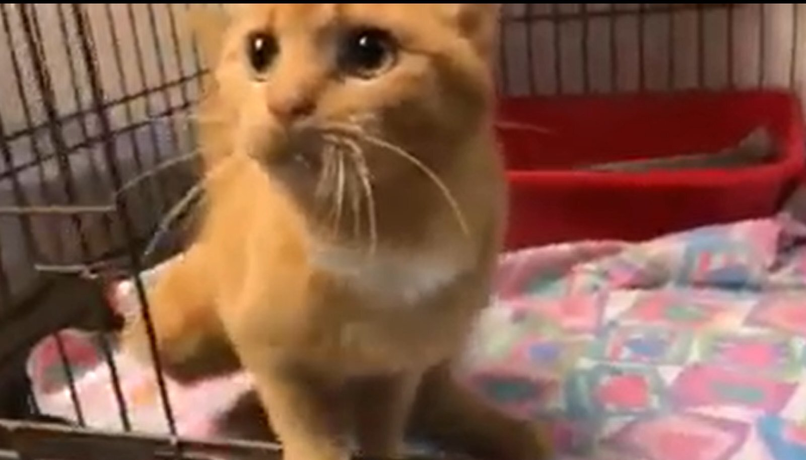 Tuulutusava vahele jäänud kass