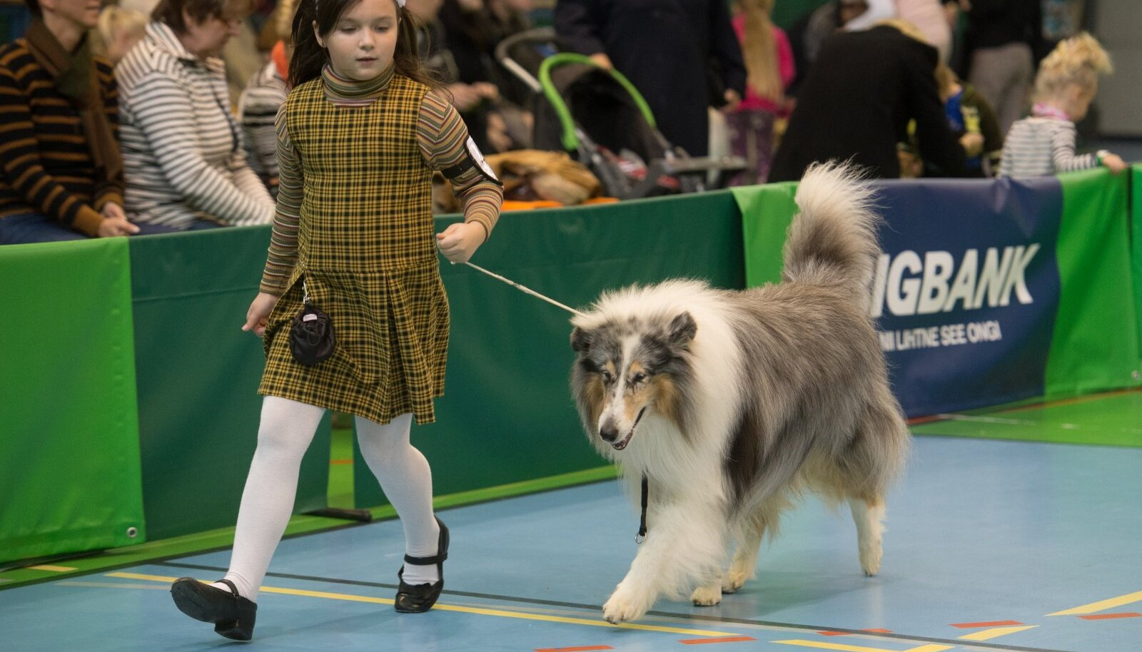 Heategevuslik koertenäitus BIGBANK Match Show