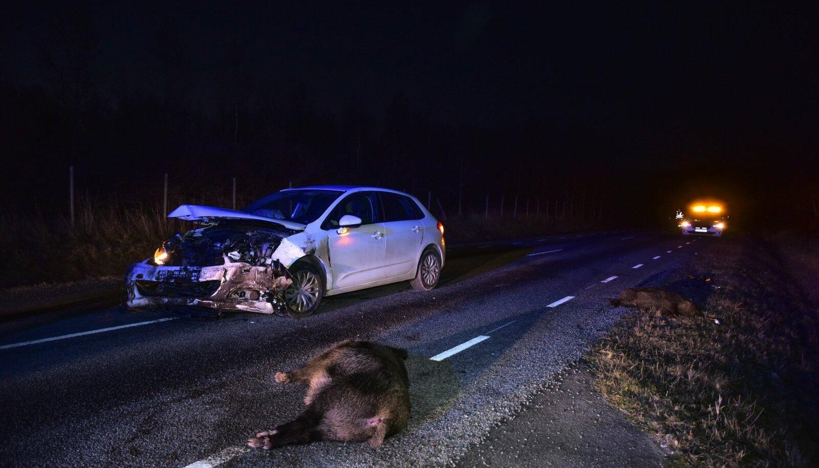 Viljandimaal hukkus avariis kolm metssiga