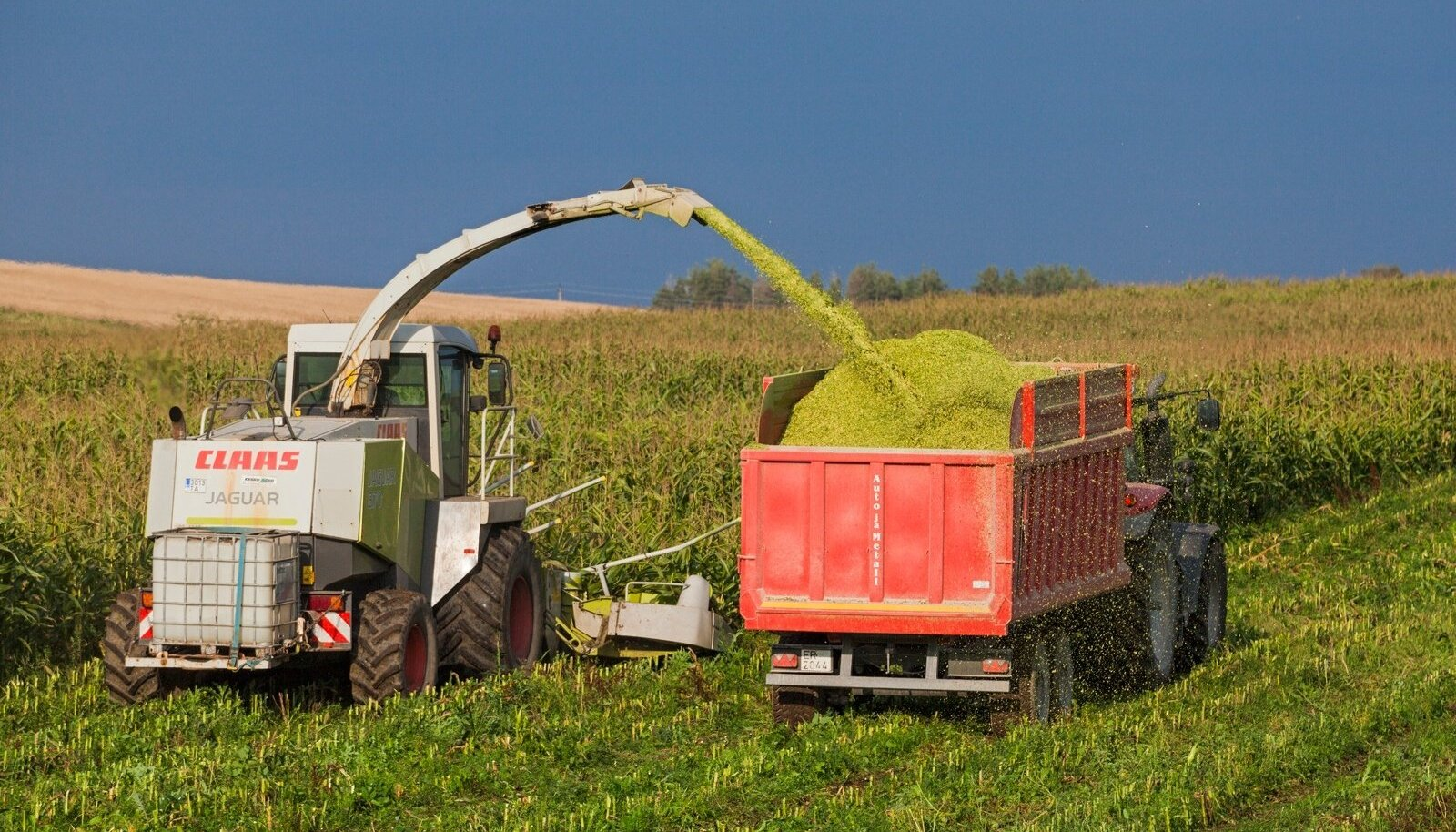 Parim aeg maisisilo tegemiseks on septembris ja oktoobris, niisiis seisab see peagi ukse ees.