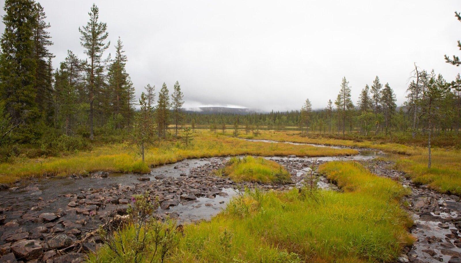 PALJU SÄÄSE- JA SILMARÕÕMU: laugaste, kaljude ja jääkülmade jõekeste kõrval võib pilgu suunata ka Vene piiri poole, kus tundra ulatub kuni silmapiirini.