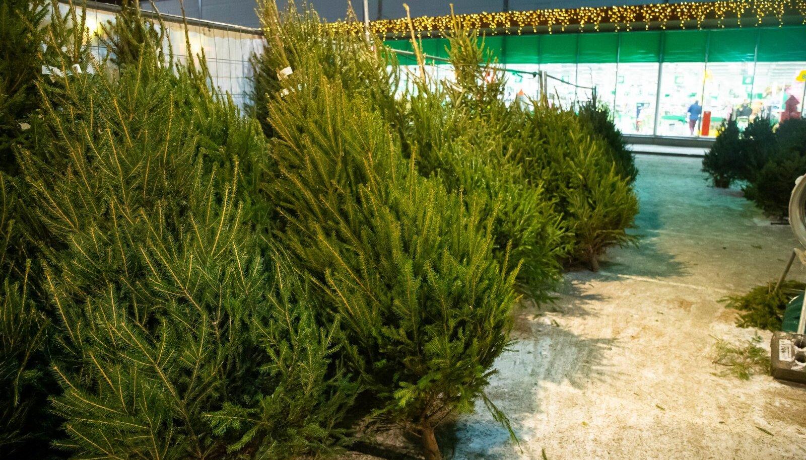 Jõulukuuskede müük Tartus