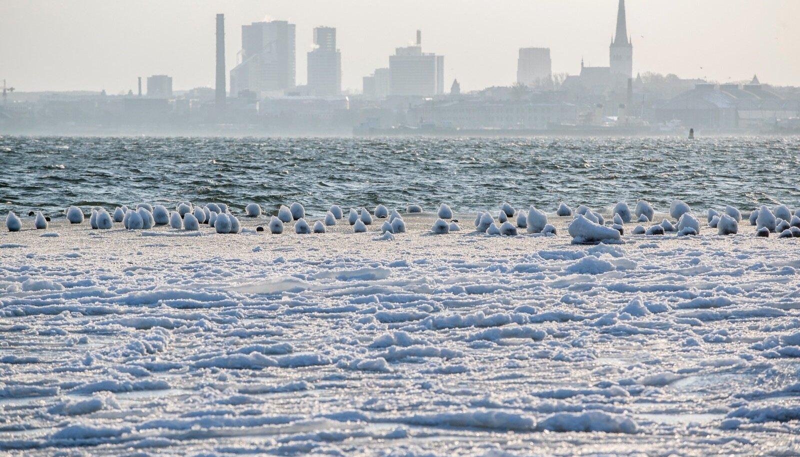 Pakaseline talvehommik Tallinna lahe ääres