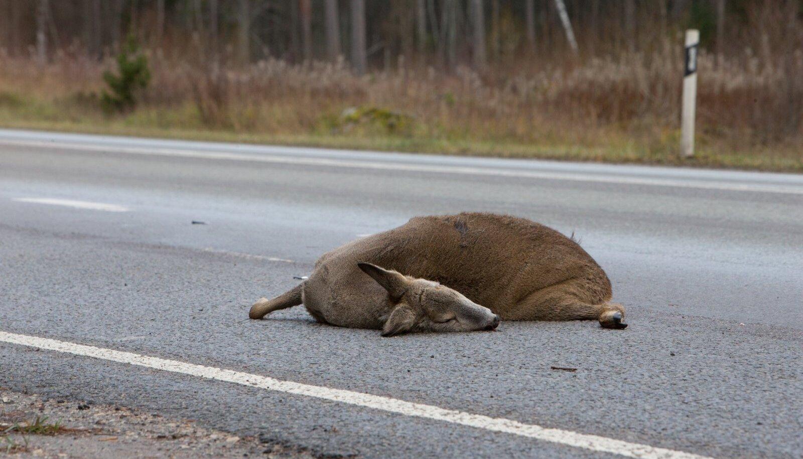 Metsloomad teel, metsloom maanteel