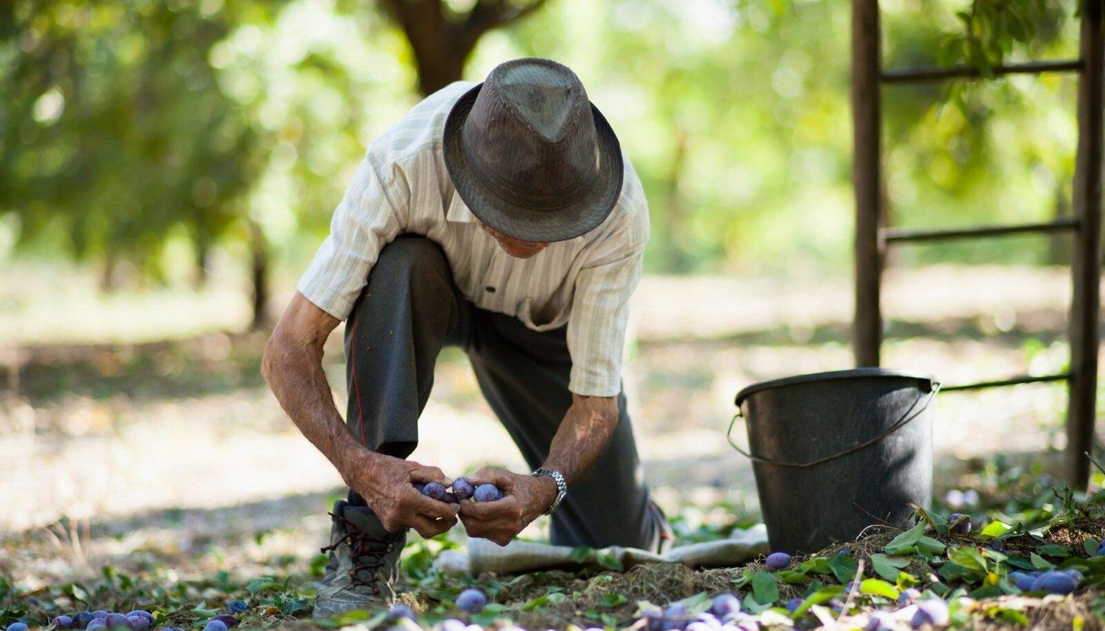 Sügisene suurpuhastus aias: vaata, millised tööd tuleb kindlasti ära teha!